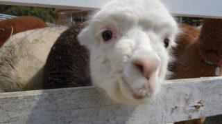 触れ合い動物とハナ ヘナの白髪染めの共通点は?